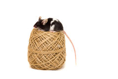 Cute decorative mouse Royalty Free Stock Photos