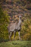 Cute Deer in the Parco Nazionale D`Abruzzo. Italy - Villetta Barrea stock photos