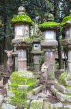 Cute deer and stone lanterns at Kasuga Grand Shrine, Nara Japan. Cute deer and old stone japanese lanterns at Kasuga Grand Shrine Kasuga-Taisha Shrine, Nara royalty free stock image
