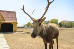 Cute deer in zoological garden. On sunny day stock image
