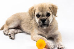 Cute dog Royalty Free Stock Photo
