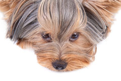 Cute dog royalty free stock image