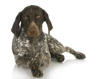 Cute dog Stock Images