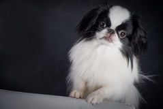 Cute dog. Portrait of cute dog with copy space Royalty Free Stock Photo