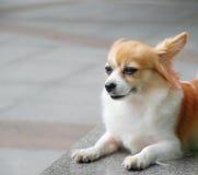 Cute dog. Lying on the slate royalty free stock photo