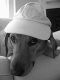 Cute dog. Wearing a hat Stock Photo