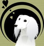 cute dog Στοκ Εικόνες
