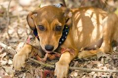 Free Cute Dog Royalty Free Stock Photo - 62987055