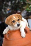 Cute dog Royalty Free Stock Images