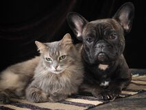 Free Cute Dog And Cat Lie Together On The Floor. Friendship Pets. The Dark Background Royalty Free Stock Photo - 202245135