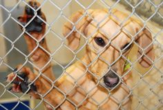 Cute Dog at an Animal Shelter Stock Photos
