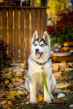 Cute dog in the autumn park Royalty Free Stock Images