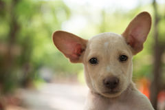 Cute dog. With background of bokeh and trees Stock Image
