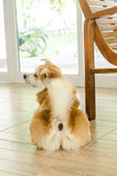 Cute dog from the backside stock images