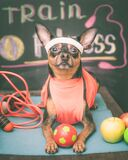 Cute dog with a ball. Dog football player  or trainer .  Football,  basketball  and  volleyball. Dog Fitness , sport  and