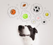 Cute dog with balls in thought bubbles Royalty Free Stock Photo