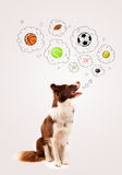 Cute dog with balls in thought bubbles Stock Photo
