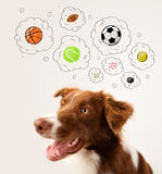 Cute dog with balls in thought bubbles Stock Images