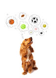 Cute dog with balls in thought bubbles Stock Image