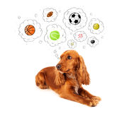 Cute dog with balls in thought bubbles Royalty Free Stock Images