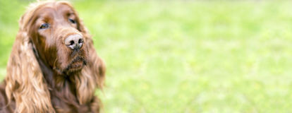 Cute dog banner Stock Images