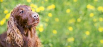 Cute dog banner Stock Photos
