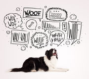 Cute dog with barking bubbles. Cute black and white border collie with barking speech bubbles above her head Stock Photos