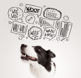 Cute dog with barking bubbles. Cute black and white border collie with barking speech bubbles above her head Royalty Free Stock Photos
