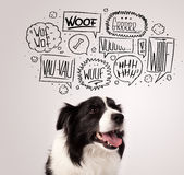 Cute dog with barking bubbles. Cute black and white border collie with barking speech bubbles above her head Royalty Free Stock Photography