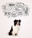 Cute dog with barking bubbles. Cute black and white border collie with barking speech bubbles above her head Royalty Free Stock Image