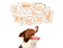 Cute dog with barking bubbles. Cute brown and white border collie with barking speech bubbles above his head Royalty Free Stock Photos