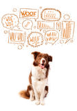 Cute dog with barking bubbles. Cute brown and white border collie with barking speech bubbles above his head Royalty Free Stock Photo