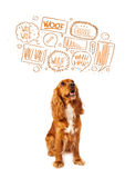 Cute dog with barking bubbles. Cute cocker spaniel with barking speech bubbles above her head Royalty Free Stock Photos