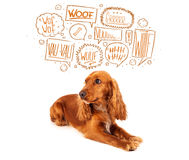 Cute dog with barking bubbles. Cute cocker spaniel with barking speech bubbles above her head Royalty Free Stock Photo