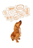 Cute dog with barking bubbles Royalty Free Stock Photos