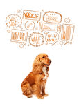 Cute dog with barking bubbles. Cute cocker spaniel with barking speech bubbles above her head Royalty Free Stock Photography
