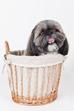 Cute dog in a basket Royalty Free Stock Photography