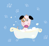 Cute dog bath Stock Photography