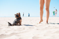 Cute dog on the beach Stock Images