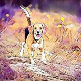 Cute dog beagle Royalty Free Stock Photos