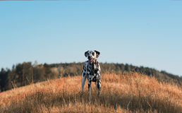 Cute dog and beauty landscape Royalty Free Stock Images