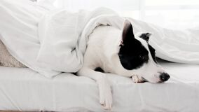 Cute dog in bed