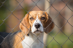 Cute dog behind fence Royalty Free Stock Photos