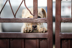 Cute dog behind metal gate Stock Images