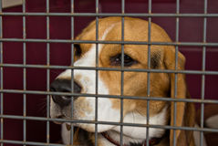 Cute Dog behind metal grate Royalty Free Stock Photo