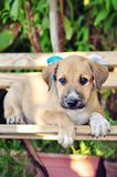 Cute dog in a bench stock photo