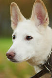 Cute dog with big ears. On the nature Stock Photos