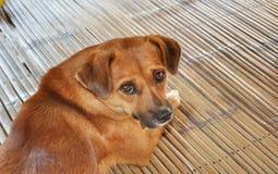 Cute dog with big eyes stock image