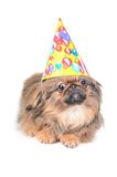 Cute dog with birthday hat isolated on white Stock Photo