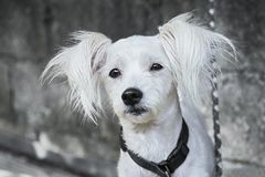 Cute dog in black and white stock image